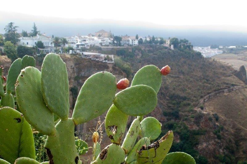 southern Spain road trip itinerary - Ronda
