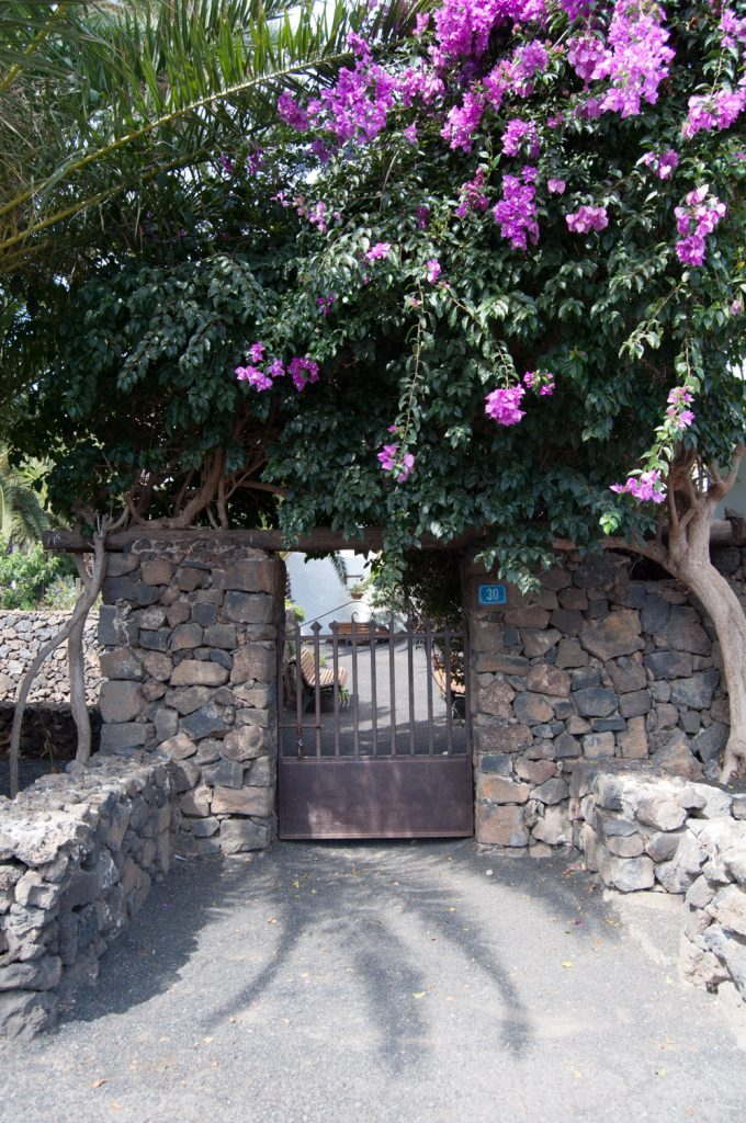 Iron cast gate on stone walls covered in lush plants and with lillac flowers