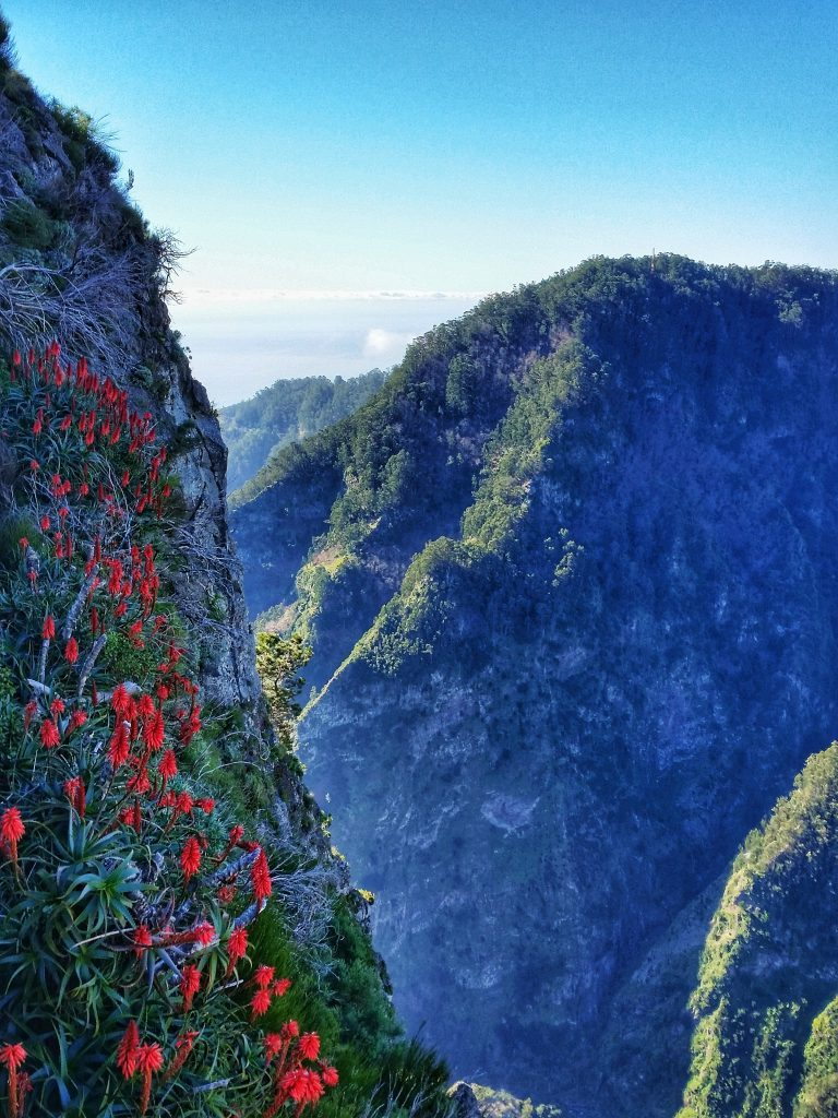 How to make the most of a week in Madeira (Portugal) | Wanderwings