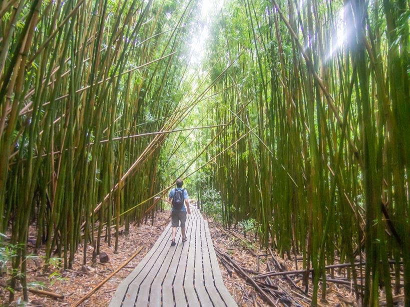 Man walking among bambus trees