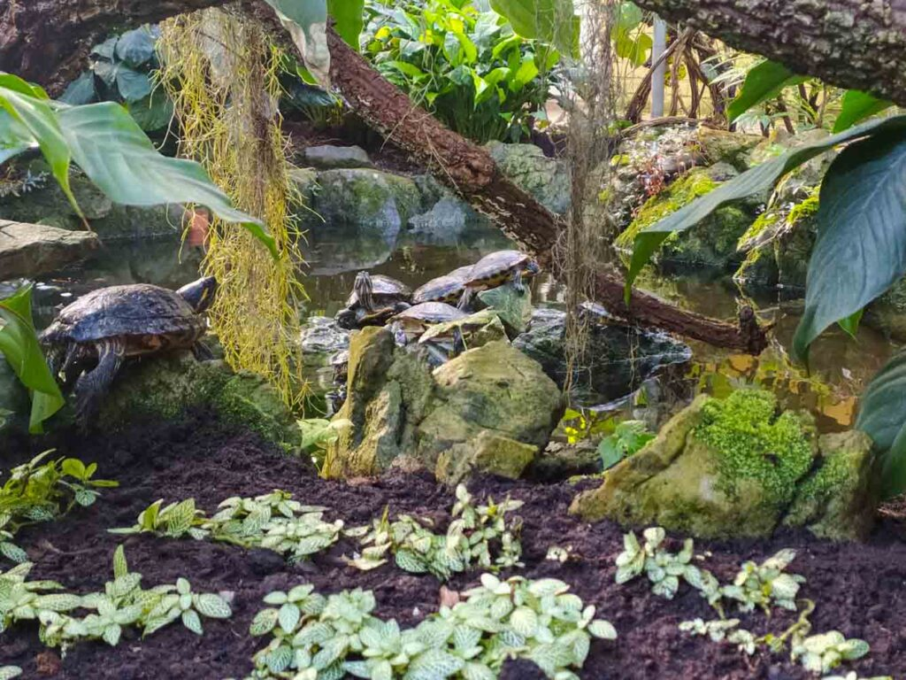 Turtles in a greenhouse in Belgium